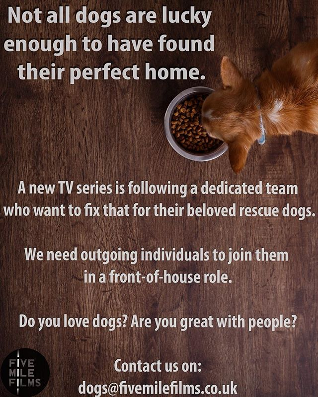 A TV company have asked me to help spread the word about a new UK prime time series about rescue dogs. So for all you lovely lovers of rescue dogs, this might be something for you! They are looking for people to be 'front of house' during the making of the series. I don't know anymore details, but If you are interested, then all you have to do is send them an email. All the details are on the image above 👍🏻🐶 #ukrescuedogs  #dogmatch #adoptdontshop #rescuedog #dogadoption #dogrescueuk #dogsofinstagram #doggy #doggylove #rescueme #adoptiondog #dogsuk #foreverhome