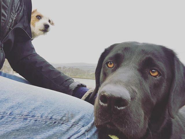 Don't worry Sid, I still love you. #dogsitting #blacklab #blacklabsquad #blacklabrador #ilkleymoor #sid #parsonsrussellterrier #dogsofinstagram #dogwalking