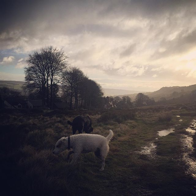 #ilkleymoor #parsonrussellterrier #labrador #dogwalks #sid #dogsofinstagram #yorkshirecountryside #dogfun #dogstagram