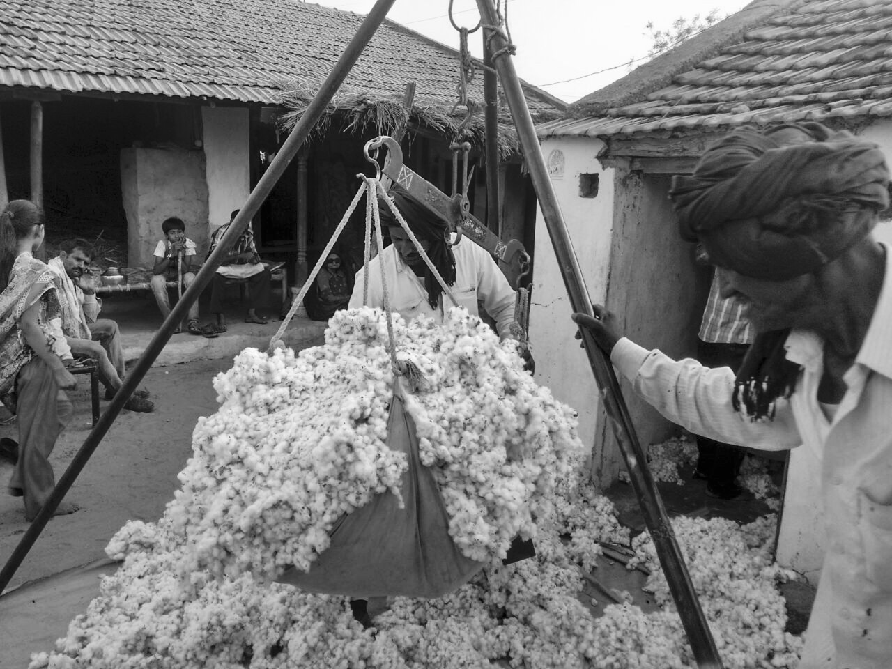 Buying raw kala cotton directly from the local growers