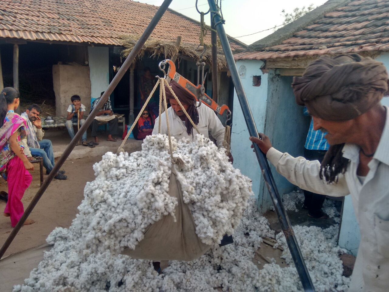 Purchasing raw cotton directly from farmers, photo: Kala Cotton Initiative