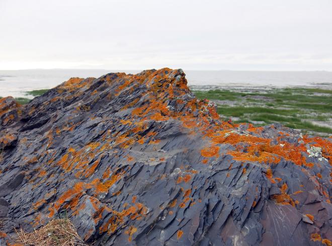 Orange Lichen on Rock 1