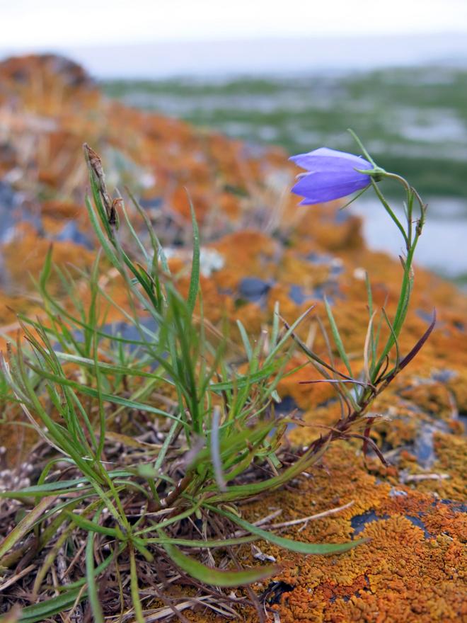 Orange Lichen Purple Flower