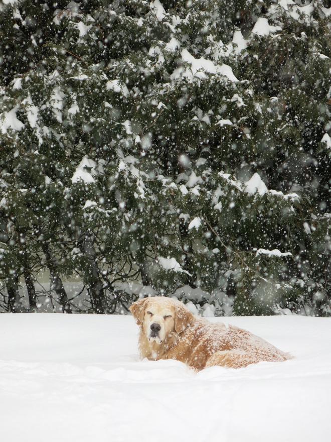 SnowstormCassie1