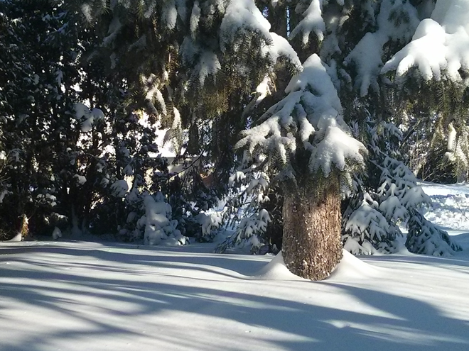 SnowstormMorningAfterTree