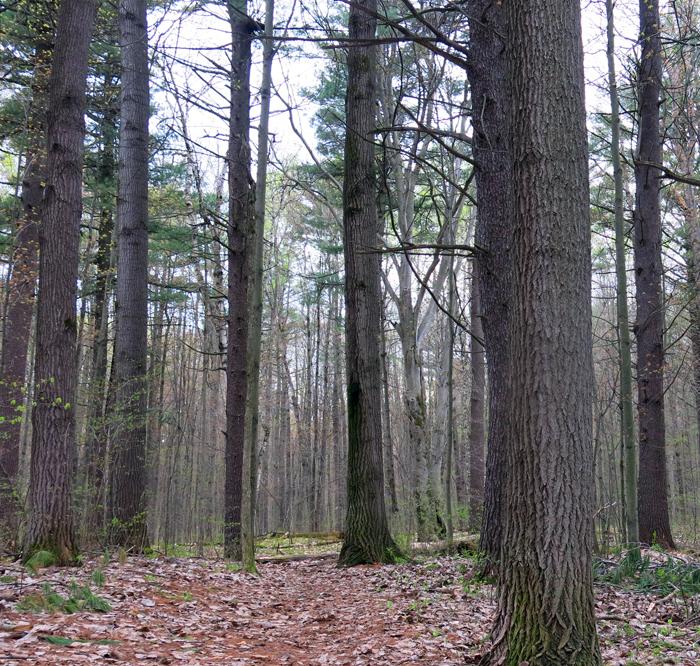 SpringMossTrees