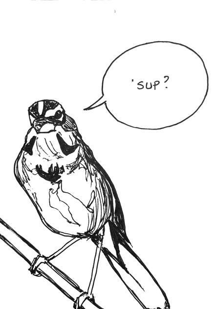 Bird11_440px.jpg