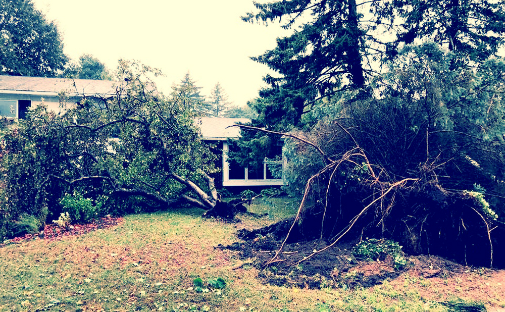 Our front yard after the storm. None of those trees are there anymore. None of them touched the house.