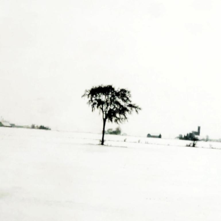 WinterTreesBW2_770px(9584).jpg
