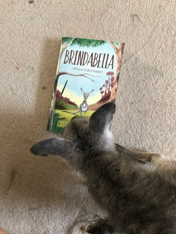 Brindabella kangaroo 4.jpg