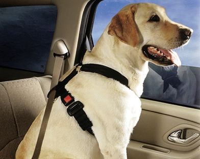 petbuckle_seat_belt_harness_on_dog_in_car-jpg