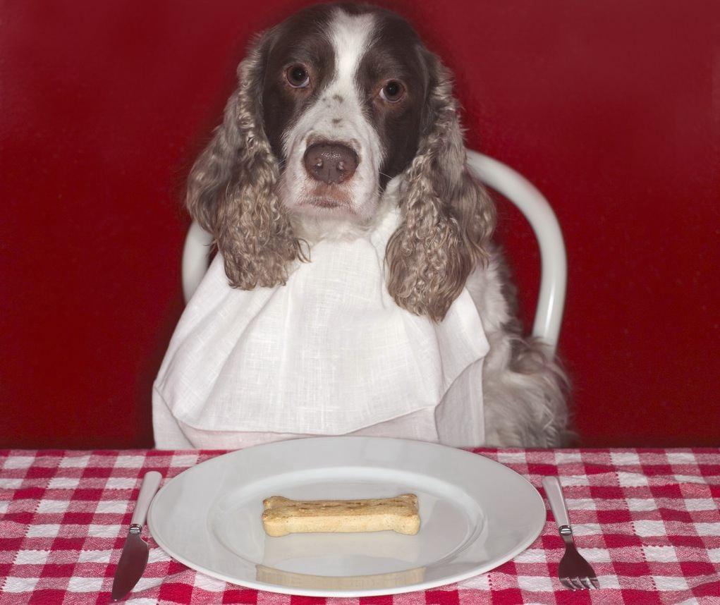 dog-eating-jpg