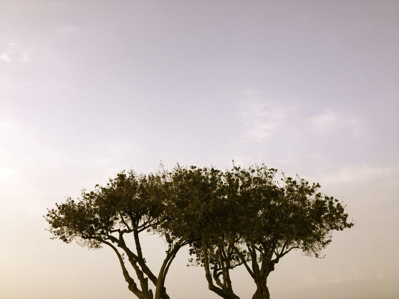 tree friend.jpg
