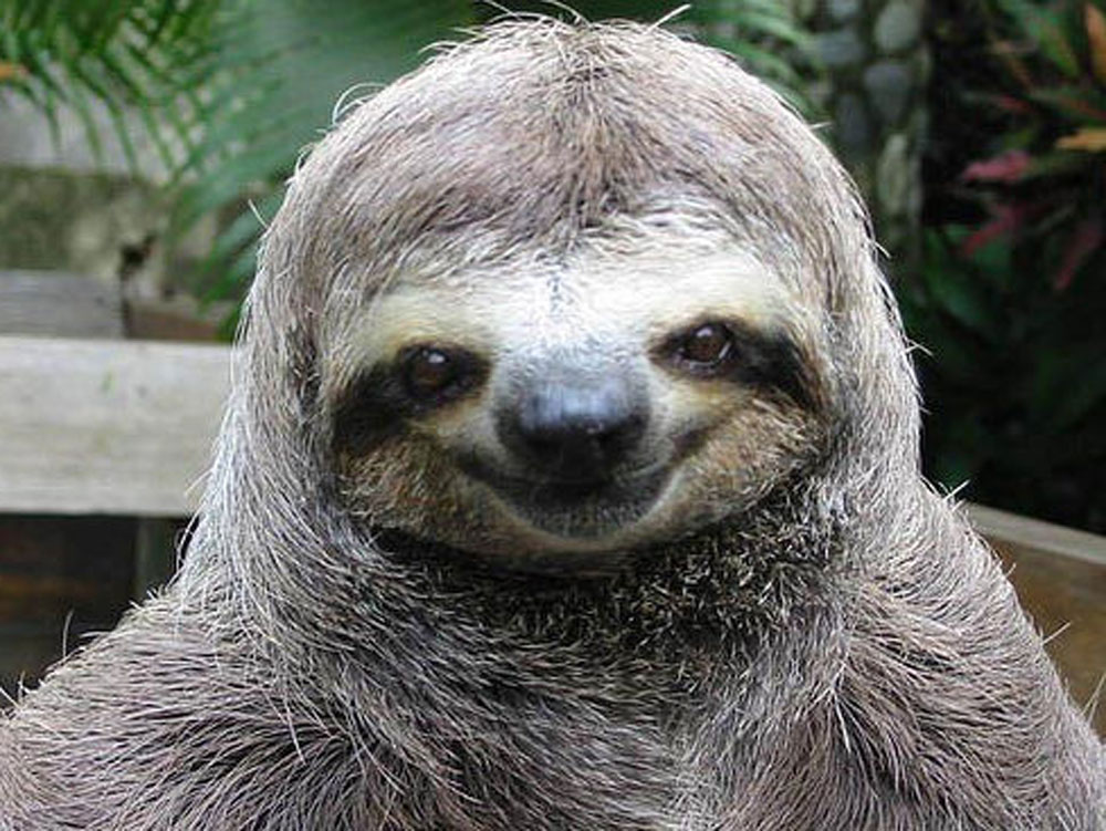 happy-smiling-sloth1.jpg
