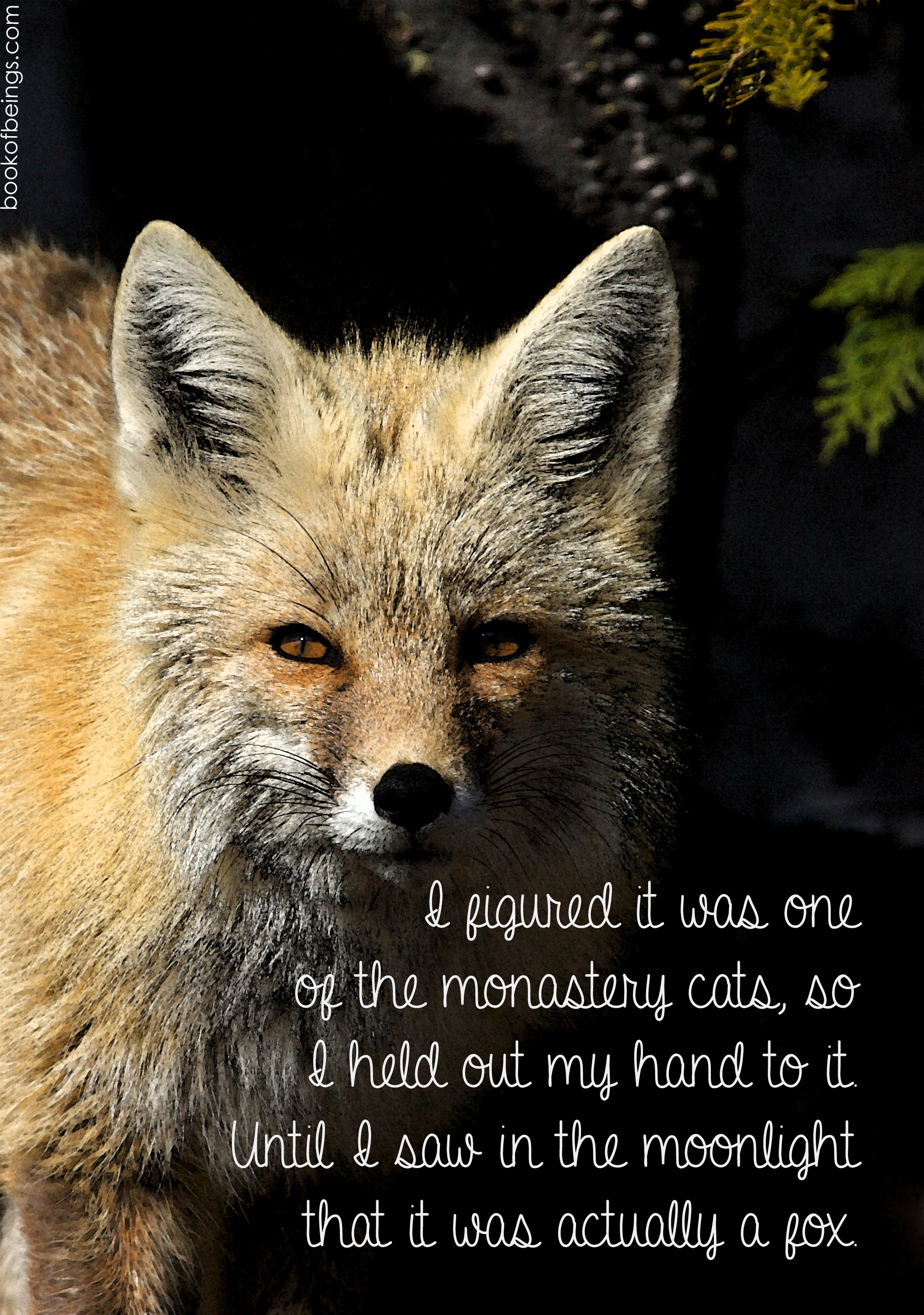 from Chapter 19  I figured it was one of the monastery cats, so I held out my hand to it. Until I saw in the moonlight that it was actually a fox.    The Book of Beings Read-Along at bookofbeings.com