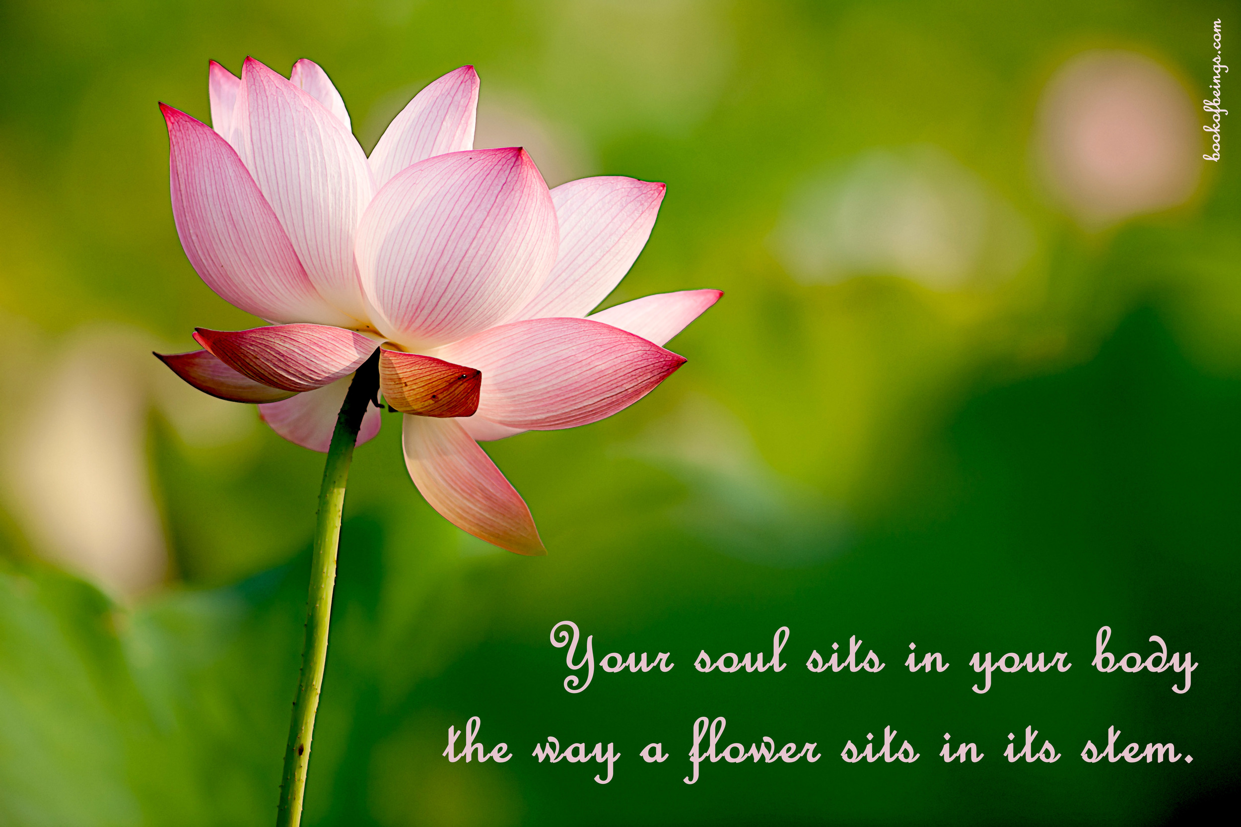 from Chapter 29  Your soul sits in your body the way a flower sits in its stem.  The Book of Beings Read-Along at  bookofbeings.com
