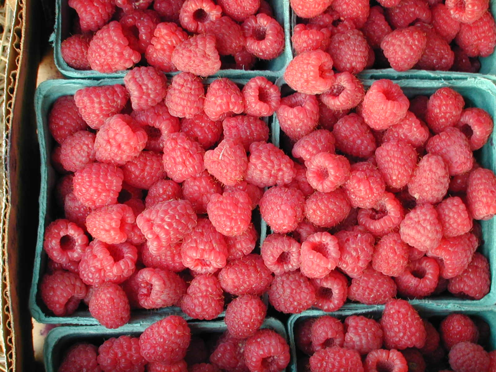 Raspberries from Lost Corner