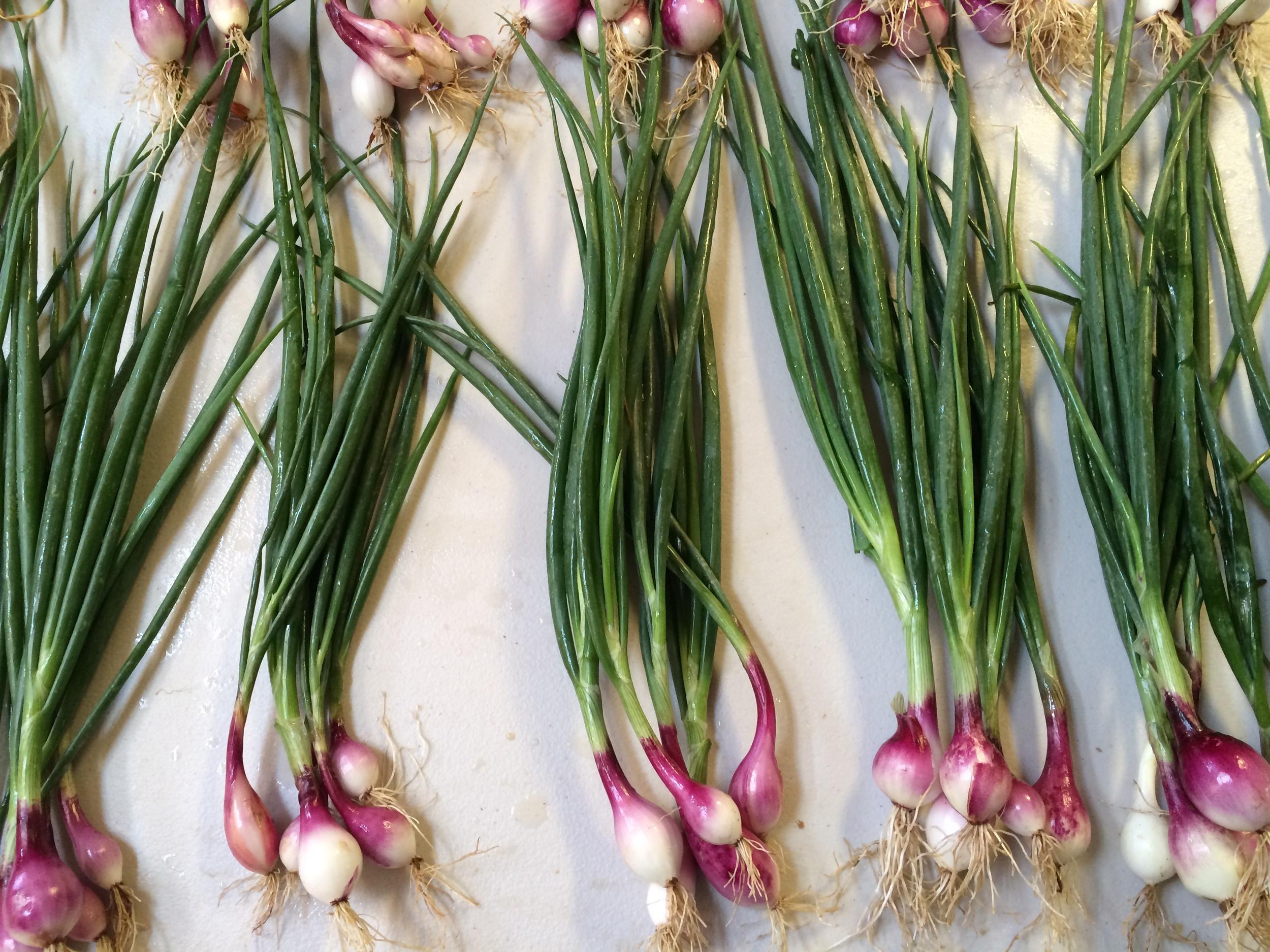 Beautiful Purplette bunching onions. So pretty & so tasty!