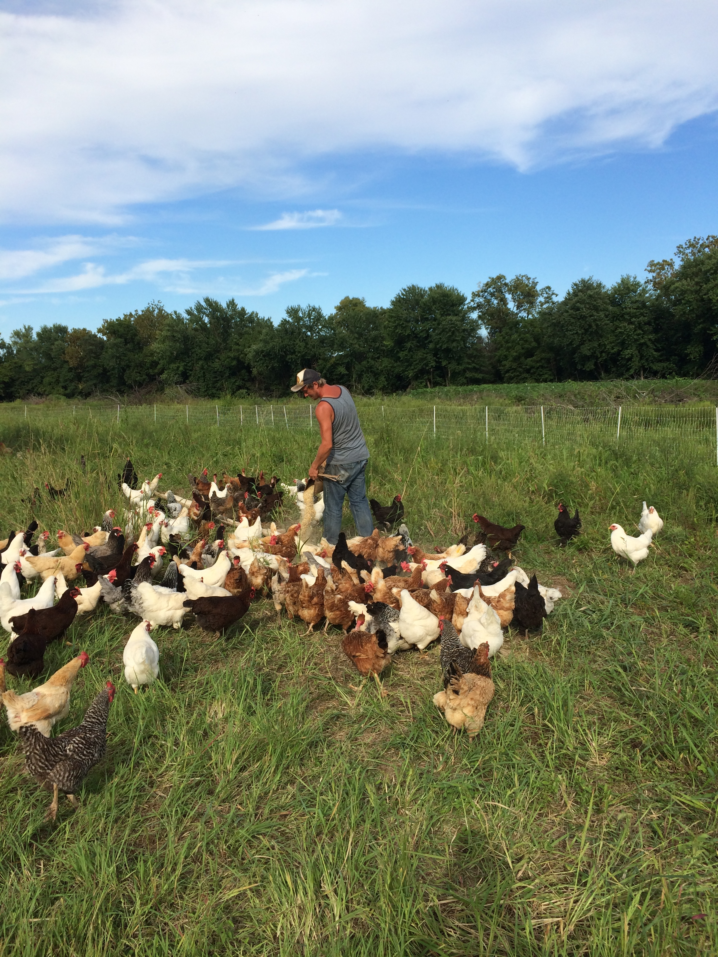 Chris feeding the chickens at the end of the day