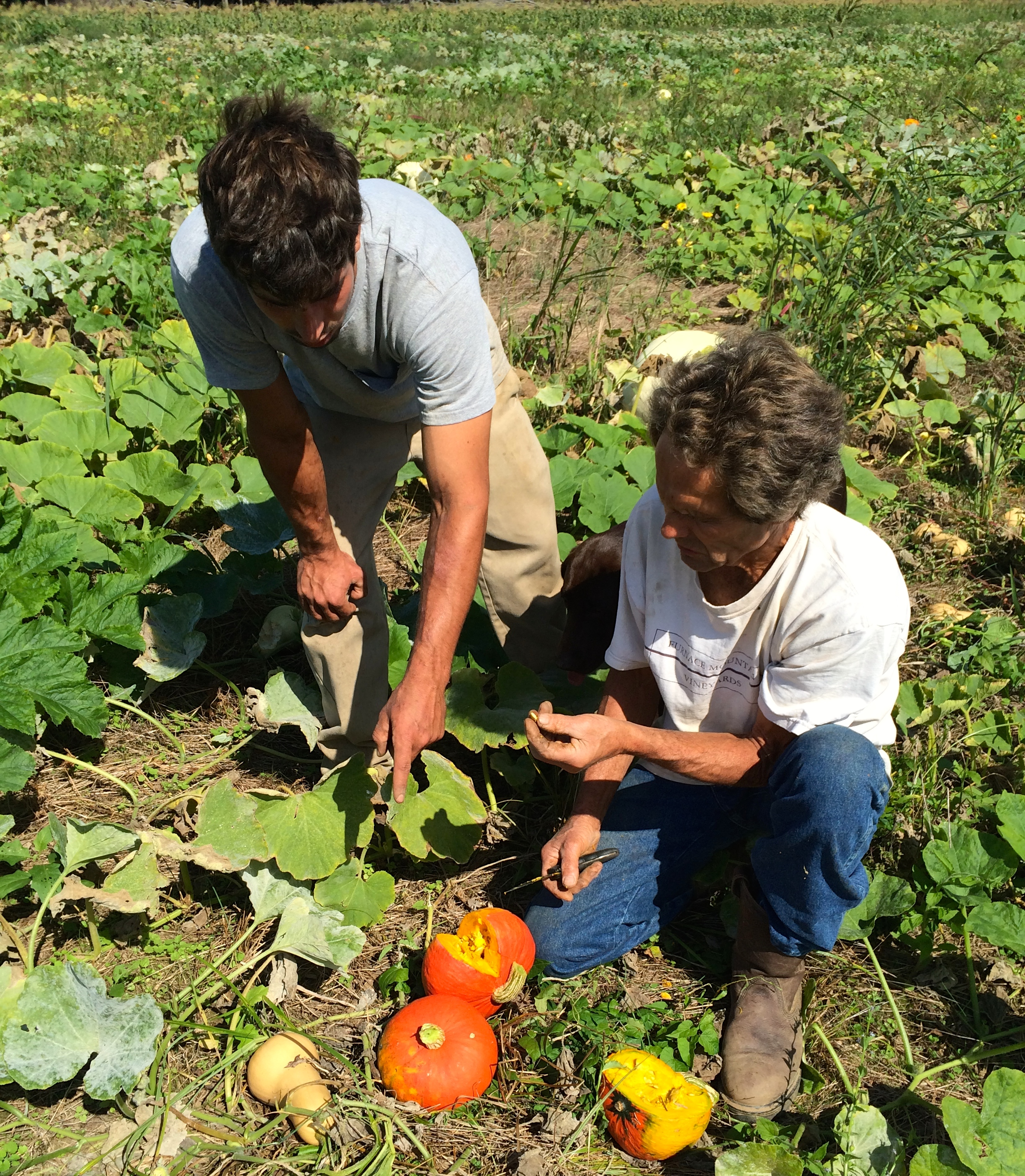 Ryan and Steven, testing for ripeness