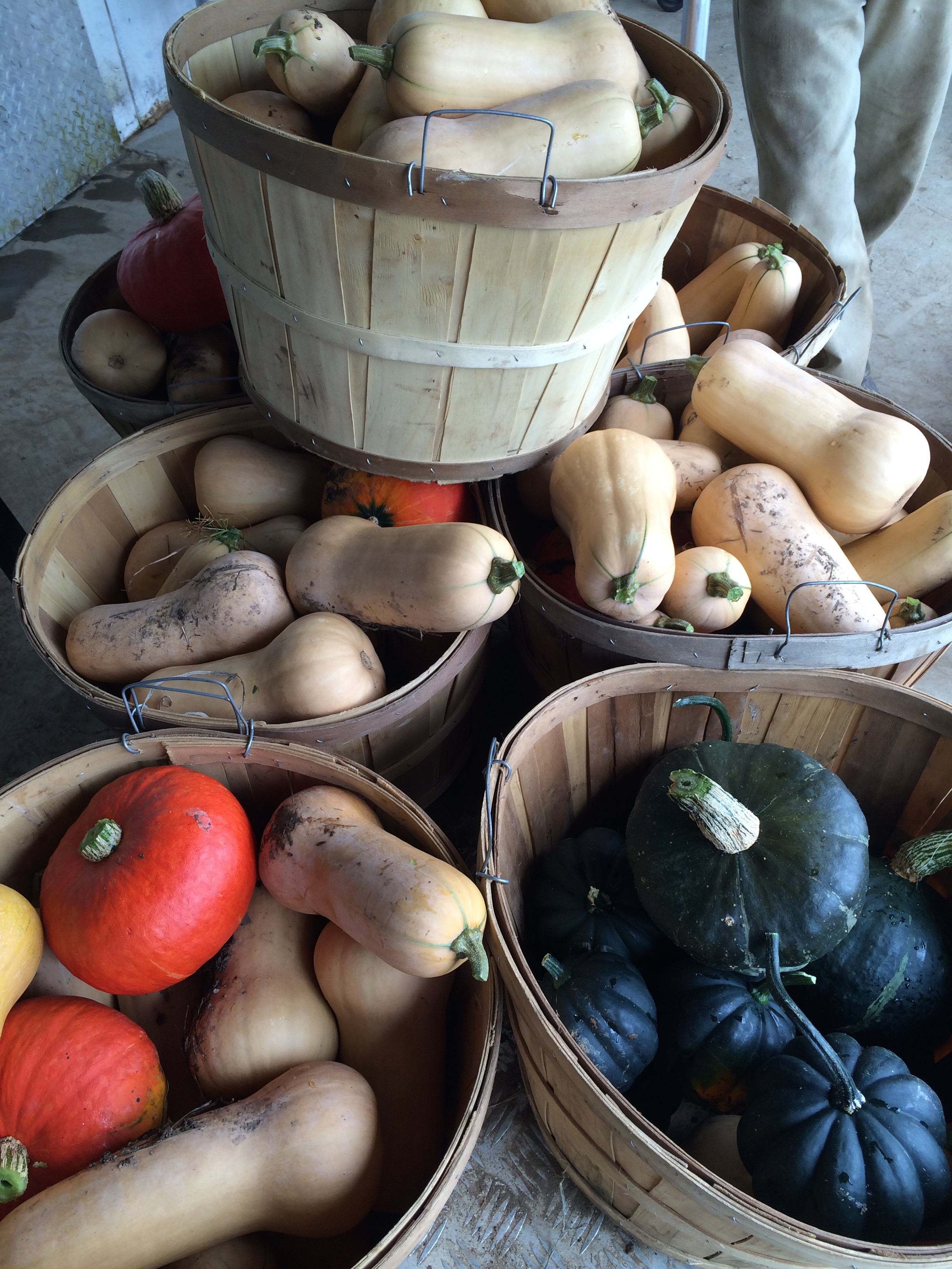 Gorgeous winter squashes, fresh from the fields