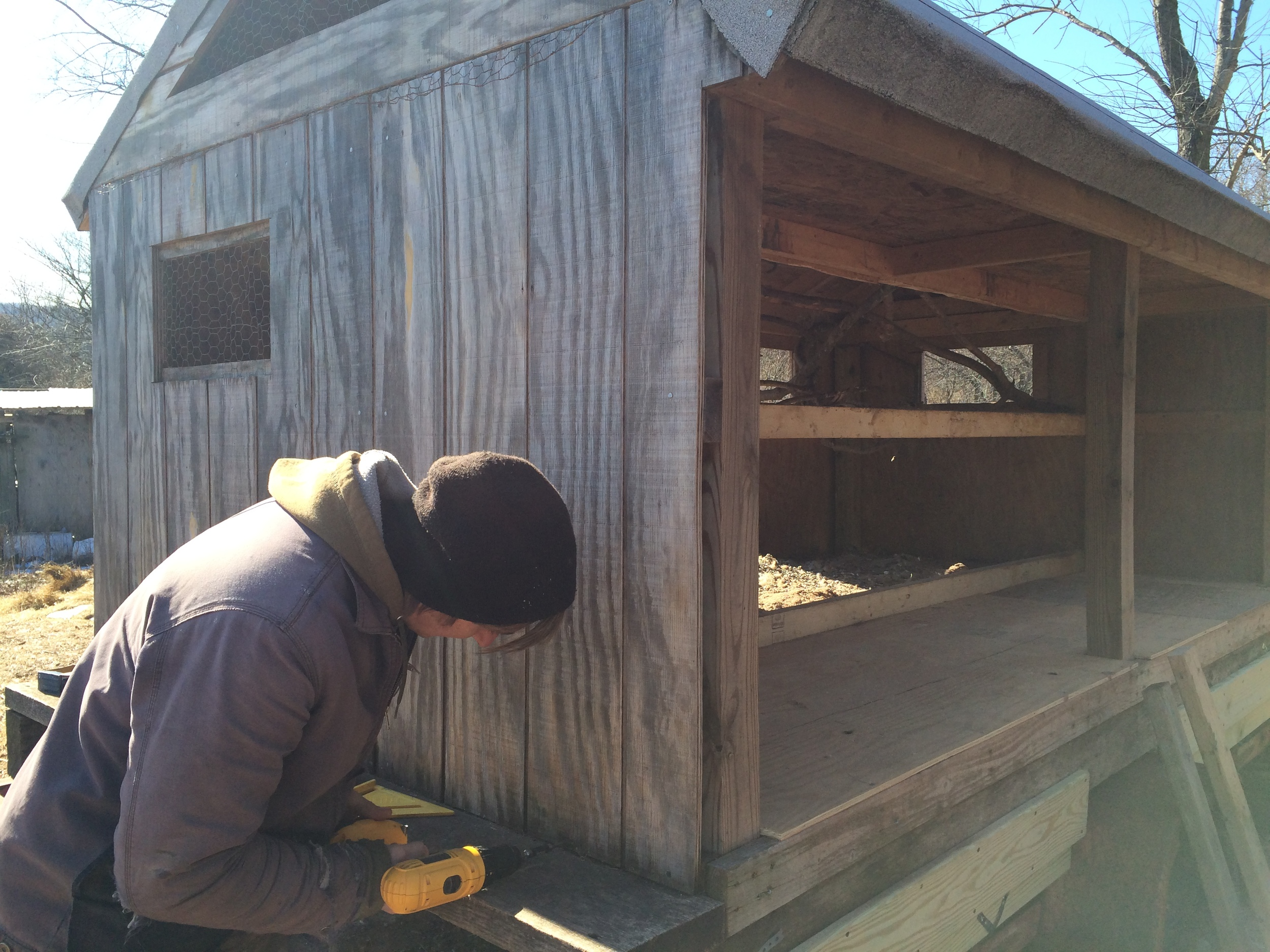 Chris, putting in some fresh screws to ensure the new(ish)hen house is nice and sturdy