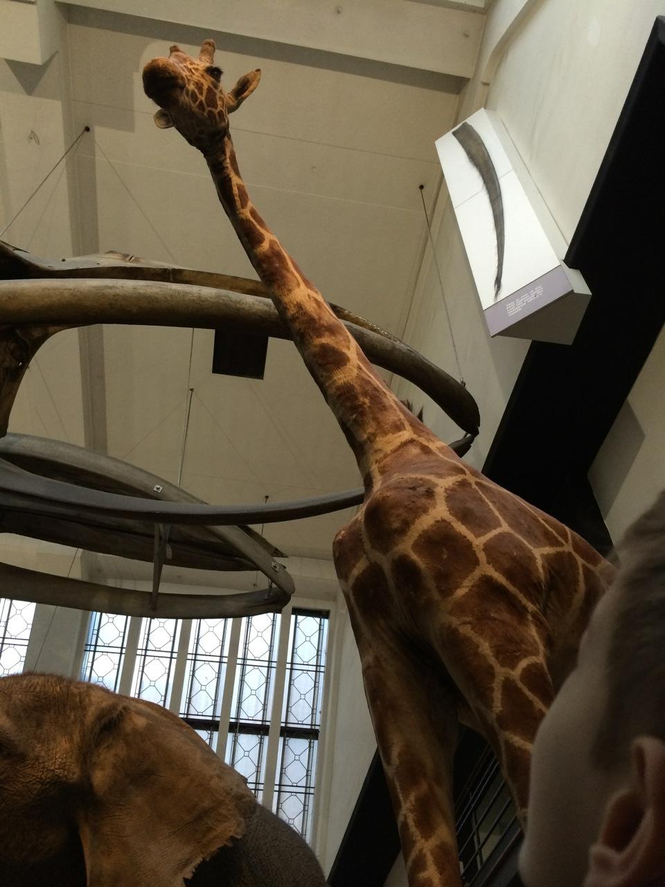Lots of big mammals on display!