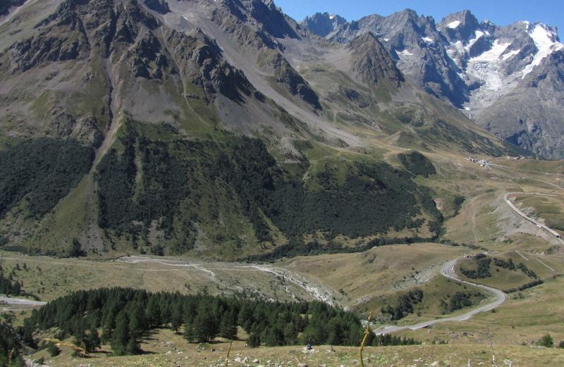 Rif Blanc Forest