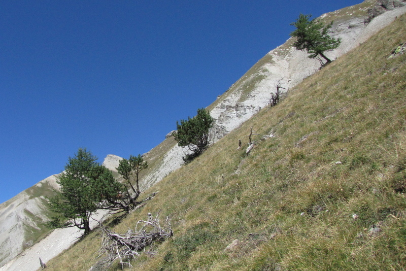 Steep alpine gradient