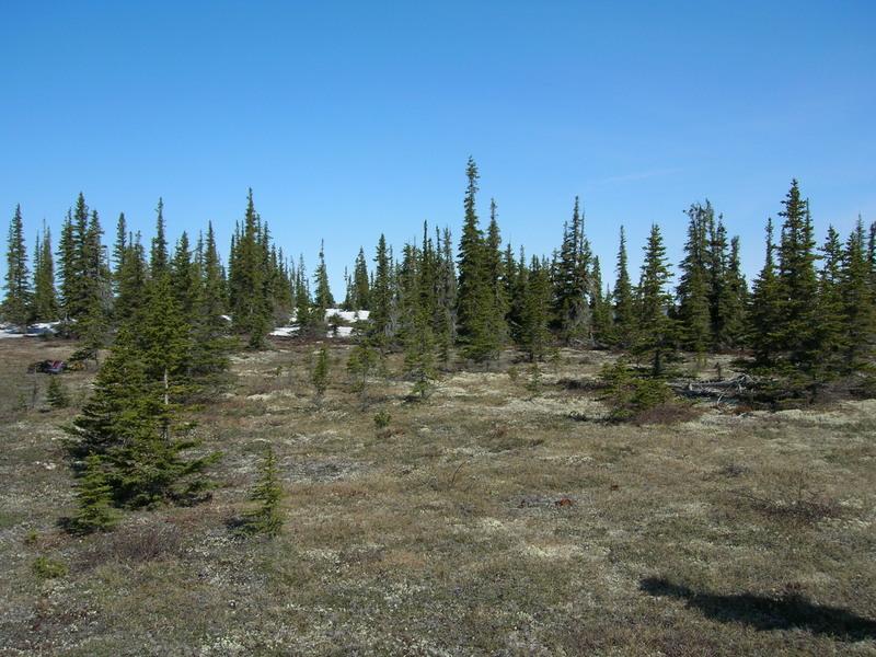 Latitudinal treeline, Churchill, Manitoba
