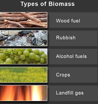 types-of-biomass.jpg