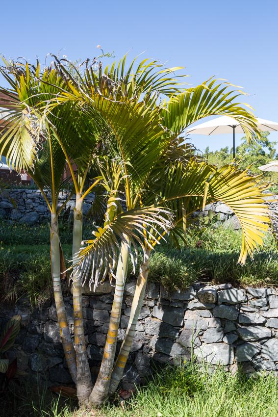 Arbres&Bambous.Cr-Sife.ElAmine-141642.jpg