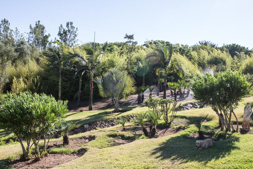 Arbres&Bambous.Cr-Sife.ElAmine-141651.jpg