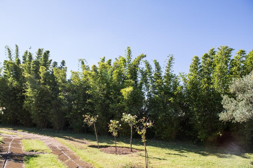 Arbres&Bambous.Cr-Sife.ElAmine-141658.jpg