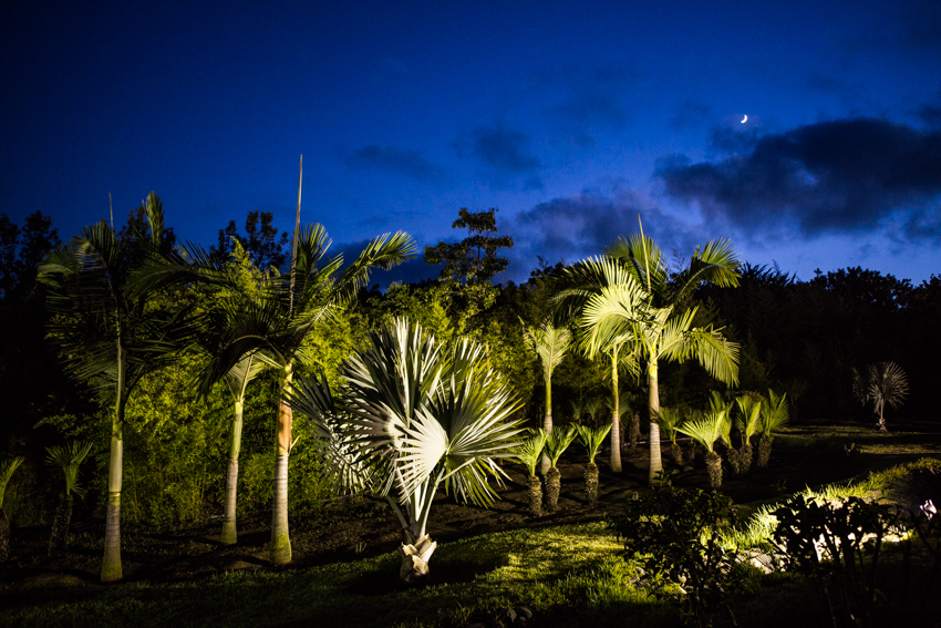 Arbres&Bambous.Nuit.Cr-Sife.ElAmine-141682.jpg