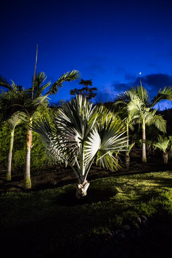 Arbres&Bambous.Nuit.Cr-Sife.ElAmine-141683.jpg