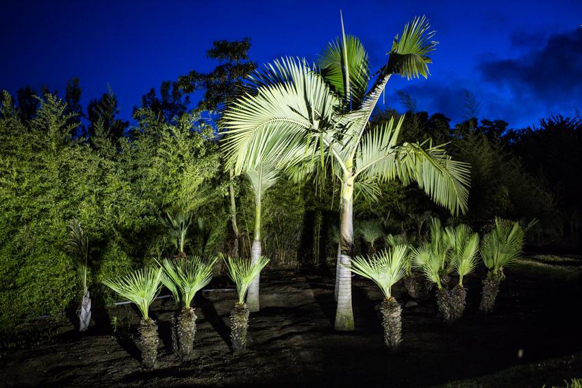 Arbres&Bambous.Nuit.Cr-Sife.ElAmine-141684.jpg