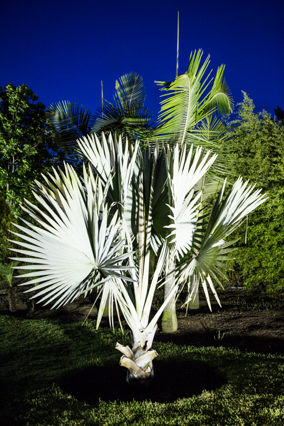 Arbres&Bambous.Nuit.Cr-Sife.ElAmine-141685.jpg
