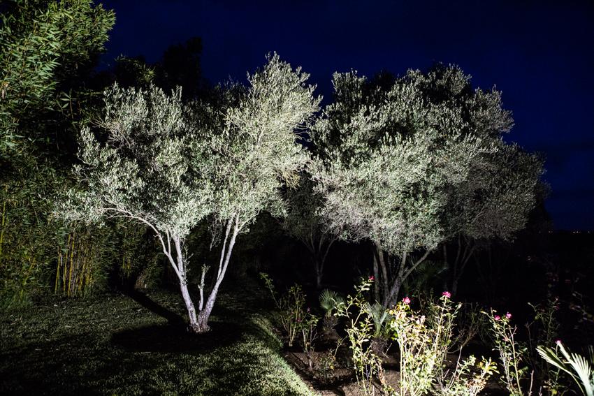 Arbres&Bambous.Nuit.Cr-Sife.ElAmine-141693.jpg