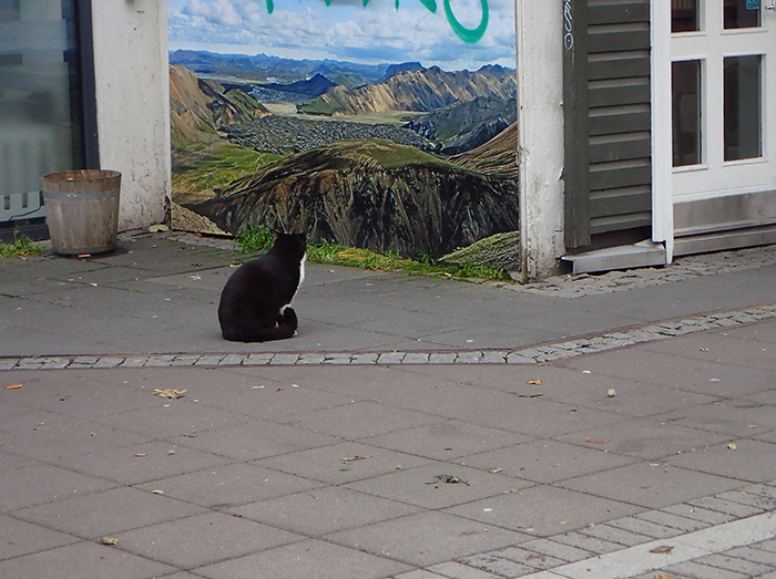 Cat staring at painting in Reykjavik, Iceland.