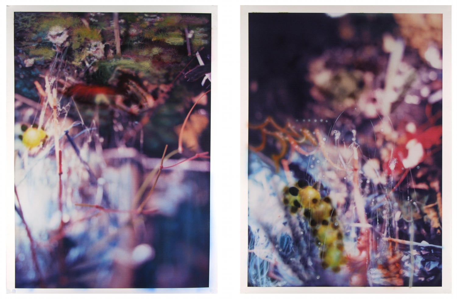 Unspoiled Natural Surroundings  India ink on two pigment prints 24x32 inches each image 2009