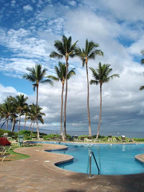 Pavilion Pool with Palm Trees.JPG