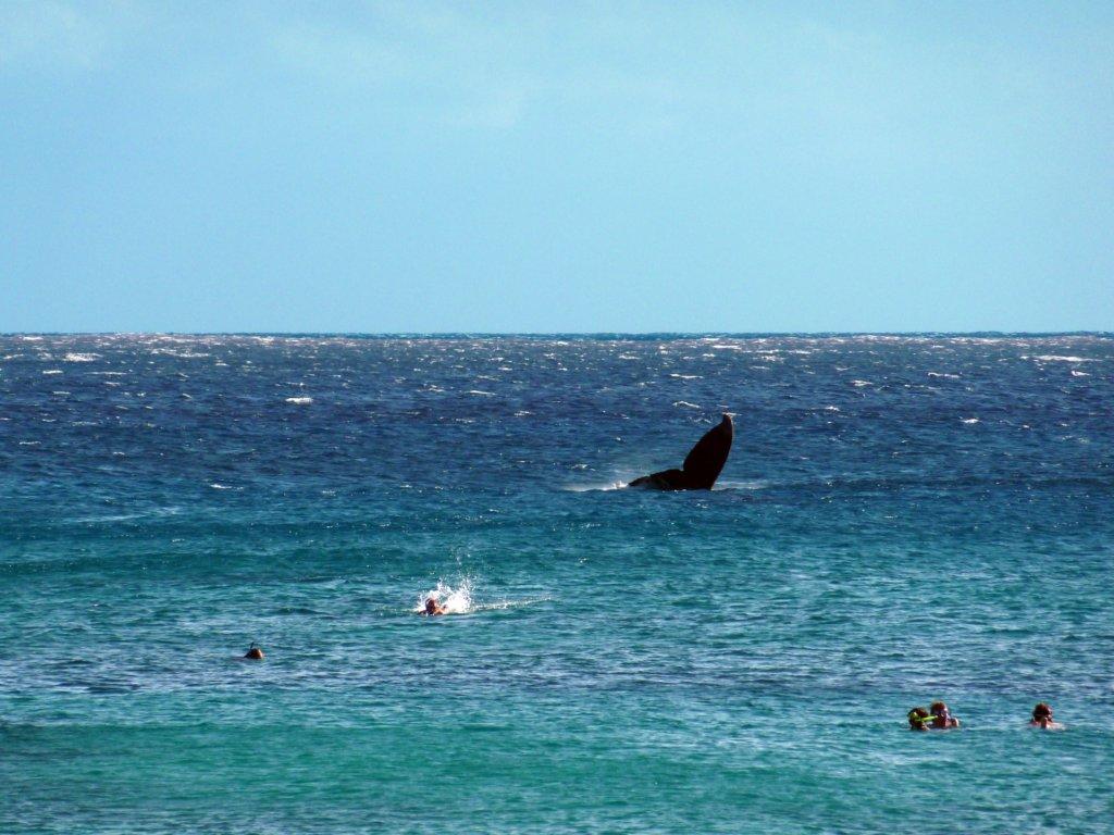 fluke with swimmers.jpg