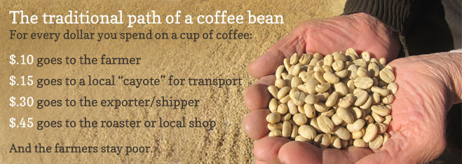 path-of-coffee-bean.jpg