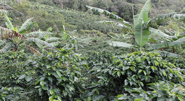 The Tarrazu region sustainable growing area in Costa Rica. Our medium-bodied citrus blend, La Pastora, hails from this region.