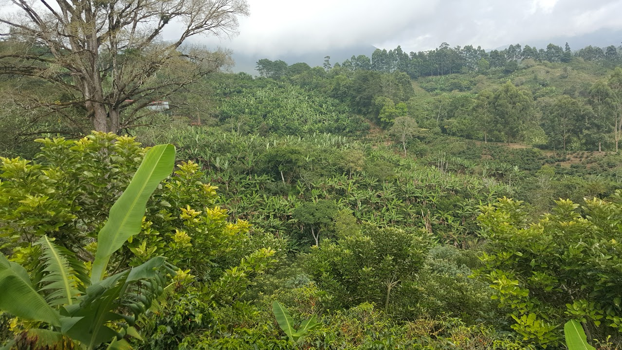 The Tarrazu region sustainable growing area in Costa Rica. Our medium-bodied, citrus noted coffee, La Pastora, hails from this region.