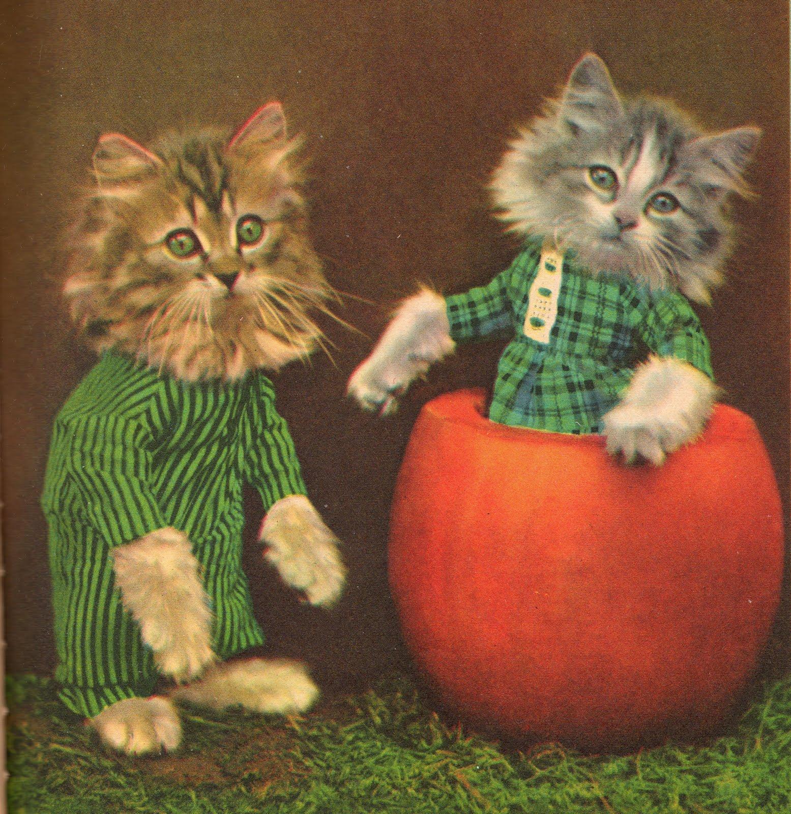 cats Frees punkin.jpeg