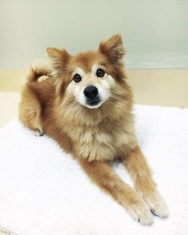 ⚡️DOG-TIME⚡️EXCELLENT! Here we go!  1: Oh hey, is there a fun-loving, fluffy guy who would look great driving a little ☁️ around town? Yeah, that would be EINSTEIN! He is 5 yrs old (but puppy forever), weighs 19lbs and is some kind of Pom, Shiba, stuffed animal mix. He loves putt-putt ⛳️ and veggie pot pie!  2: Tell me about this house elf! Oh you must mean HANNAH! She is very a gentle lady who loves birdsongs and the breeze blowing through tree branches. She is 2.5 yrs old and weighs 41 so she is a perfect medium who loves woodland strolls, beach picnics and reading books fireside.  3: My favorite ice cream flavor is Cookies and Cream. Got a dog for that?? Yup! That's OAKLEY! This guy is equally fun and sweet, loves playing catch 🎾, exploring and would love his own backpack for outdoor adventures! He is a cattle dog / chocolate chip mix, 3 yrs old and 39lbs. His ears get satellite radio and his nose can find a dropped pizza crust within 1/2 a mile.  4: I'm more of a creamsicle person and it's very important my dog reflect that. Oh, okay! How about MOÑECO? He is a low rider, corgi mix with beautiful orange and cream fur! He has expressive eyes and is an all American Classic Nice Guy. He is 3 yrs old and weighs 23lb. His perfect afternoon is finishing the Sunday Times crossword or a book of Sudoku while playing Parks and Rec in the background.  5: I would like to become an amateur sleuth and really need a sidekick. Well, then you have to meet ORAN! She is smart, distinguished and has a great sniffer!! She already knows cool things like sit, down and drop and could likely learn how to dust for fingerprints. She is a a 1 yr old German Shepherd and weighs 38lbs. She loves 60s cinema and collects beach glass.  6: I tried to adopt an ET but it's not legal in my county. Do you have any intergalactic dogs? Why yes! Meet MASON! He has traveled through three solar systems and just really loves nachos so he has decided to stay here. He is 1 yr old (in Earth time) and weighs 19lbs. He is an easy going guy, loves people, playing bocce ball and just wants to know more this weird place we call home!! 🌎