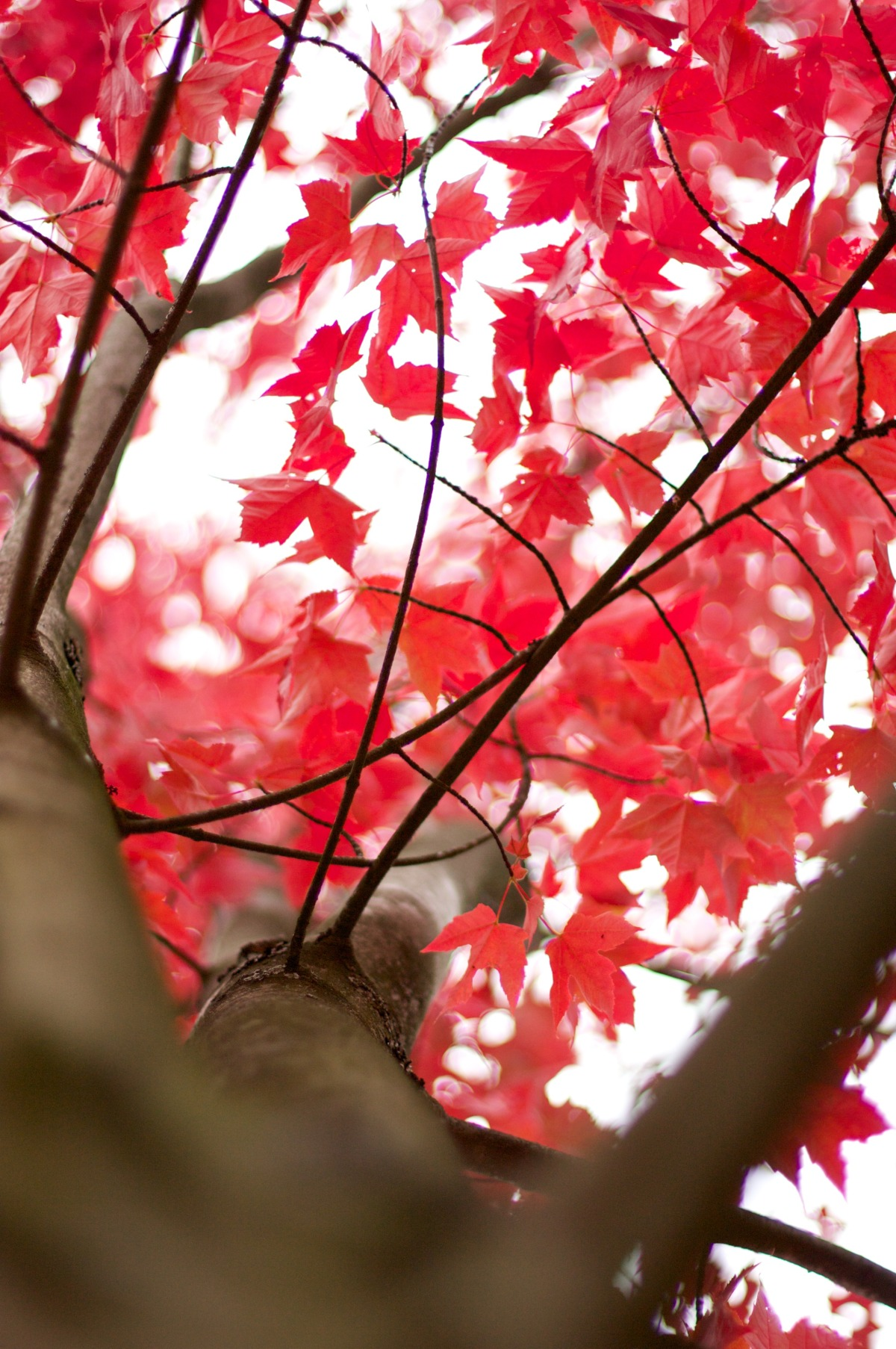 2009-10-10 at 10-24-06 autumn branch fall landscape maple nature red trees.jpg