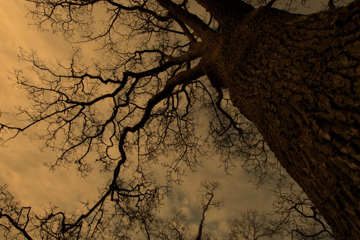 2012-02-05 at 08-52-49 bare branches looking up scarey threatening trees winter.jpg